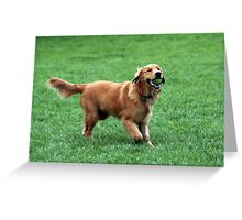 Adorbz Golden Retriever