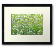 Daisies Gone Wild Framed Print