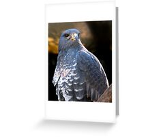 Handsome Buzzard!! Greeting Card