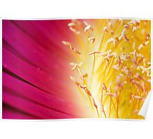 Pink Succulant flower Poster