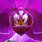 Orchid No. 1 by Harry H Hicklin