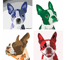 Quintet - Boston Terrier Photographic Print