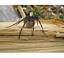 Spider and Egg Sack Photographic Print
