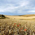 South Downs Gold by mikebov