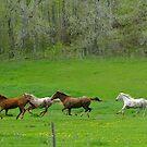 Run! by Tracy Faught