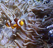 I found Nemo by Elijah Russo