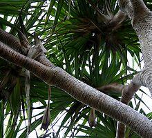 Fraser Island Pandanus Palm by Tammy Serdiuk