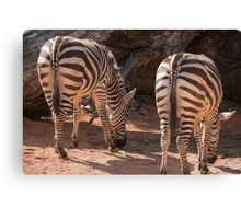 zebra in the forest Canvas Print