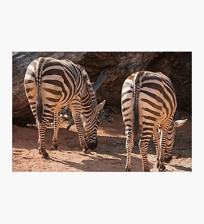 zebra in the forest Photographic Print