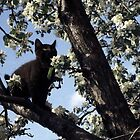 Cat In An Apple Tree by George Cousins