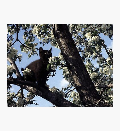 Cat In An Apple Tree Photographic Print
