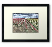 WHERE RED TULIPS MEET YELLOW Framed Print