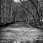 Frozen River - B&W by Nuno Pires