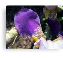 Iris Petal Canvas Print
