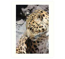 Shy Leopard Art Print