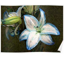 A Painted Lily Poster