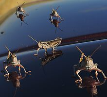 Herd of Grasshoppers by Donna Ridgway