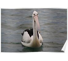 Lonely pelican Poster