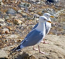 Seagulls At Lyme Regis by Susie Peek