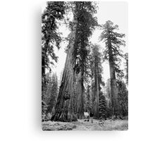 Among Giants Canvas Print