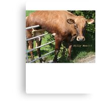 Silly Moo!!! Canvas Print