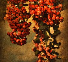 A Touch of Harvest Time by pat gamwell