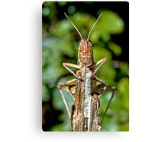 Cool Critter Canvas Print