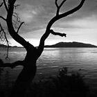 Sunset Tree (B&W) by Appel