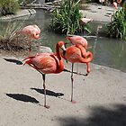 Flamingos by AlieW