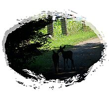 Silhouette Of Two Fawns Photographic Print