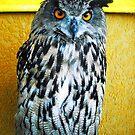 European Eagle Owl by Dawn B Davies-McIninch