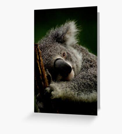 Captive Koala Greeting Card