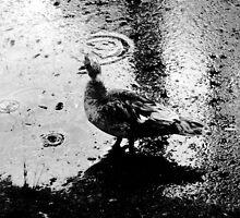 Raindrop Bird by Timothy Eric Hites
