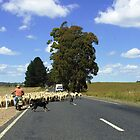 On the road to Crookwell by largo