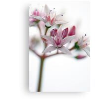 Watercolour Blossoms Canvas Print