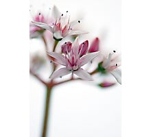 Watercolour Blossoms Photographic Print