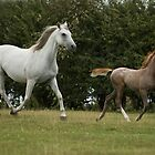 Moving Mare and Foal by laurav