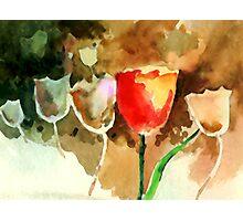 Tulips1 Photographic Print