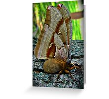Cecropia Moth, side view Greeting Card