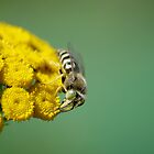 Wasp and Flower by Al Williscroft