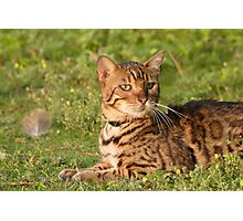 A Domestic Bengal. Photographic Print