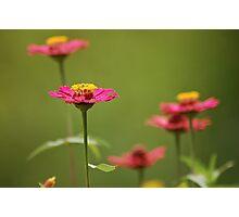 Flower Separation Photographic Print