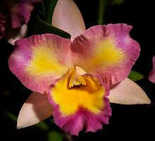 Orchid by Jeff Palm Photography