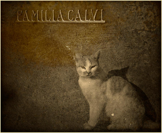 Cat on cemetery by Igor Giamoniano