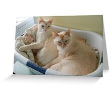 Basket Cats Greeting Card