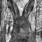 The Old Grey Hare  by Yampimon