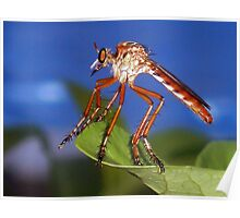 Robberfly Poster