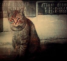 cat in front of tombstone by Igor Giamoniano