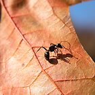 Ant by kr1sta