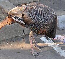 Weedy Field's Friendly Turkeys by Lenny La Rue, IPA